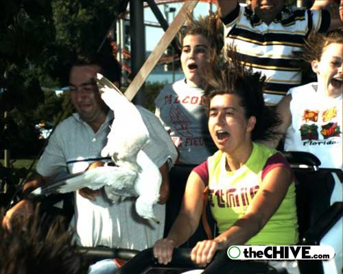 roller coaster 08 Best Roller Coaster Souvenir Photos Ever (19 Photos)