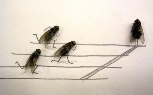 dead flies art 0 Dead fly art, surprisingly hilarious (15 Photos)