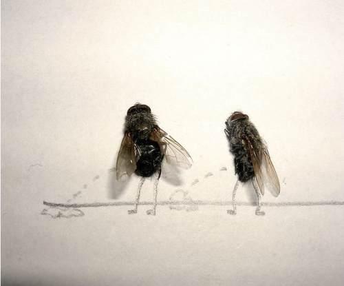 dead flies art 1 Dead fly art, surprisingly hilarious (15 Photos)