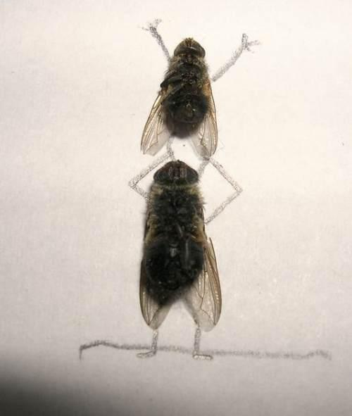 dead flies art 10 Dead fly art, surprisingly hilarious (15 Photos)