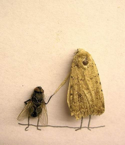 dead flies art 11 Dead fly art, surprisingly hilarious (15 Photos)
