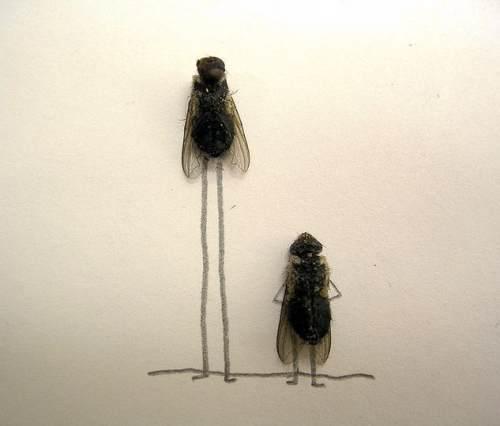 dead flies art 12 Dead fly art, surprisingly hilarious (15 Photos)
