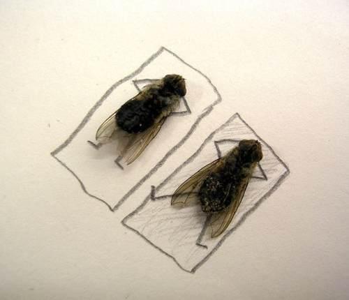 dead flies art 2 Dead fly art, surprisingly hilarious (15 Photos)