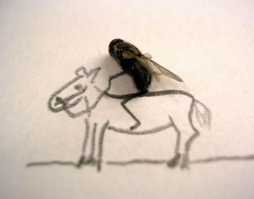 dead flies art 3 Dead fly art, surprisingly hilarious (15 Photos)