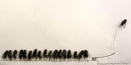 dead flies art 4 Dead fly art, surprisingly hilarious (15 Photos)