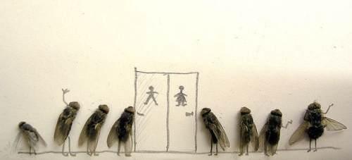 dead flies art 5 Dead fly art, surprisingly hilarious (15 Photos)