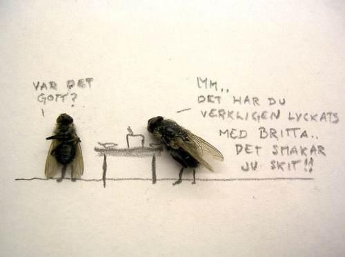 dead flies art 6 Dead fly art, surprisingly hilarious (15 Photos)