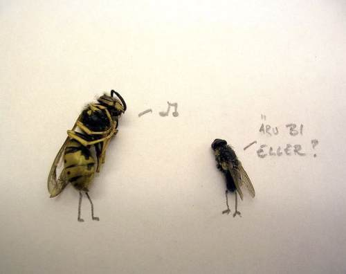 dead flies art 7 Dead fly art, surprisingly hilarious (15 Photos)
