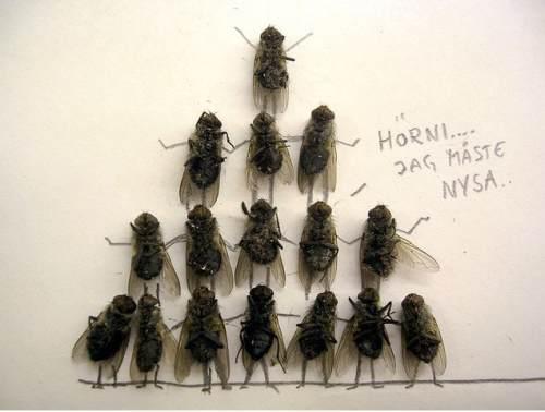 dead flies art 9 Dead fly art, surprisingly hilarious (15 Photos)