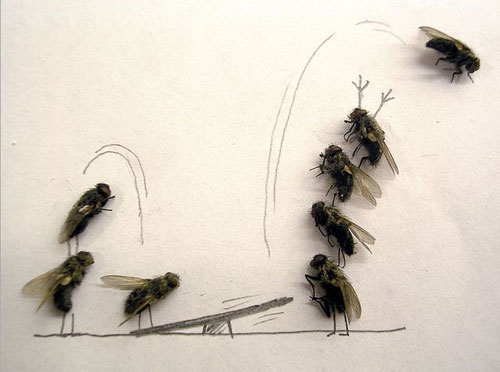 dead fly lead1 Dead fly art, surprisingly hilarious (15 Photos)