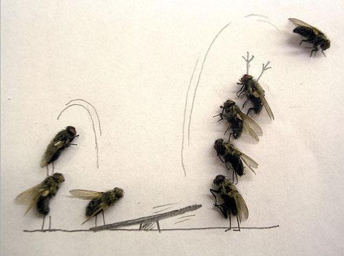 dead-fly-lead