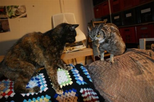 owl saved cat friends 0 Owl gets saved and spends everyday repaying its rescuer (21 Photos)