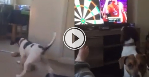 Dog chases darts throw that is on the TV.