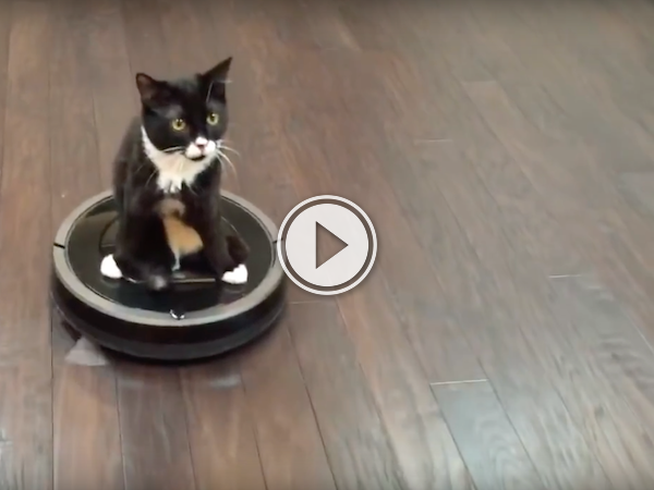 Cute 2 legged cat trades in his wheels for better ones (Video)