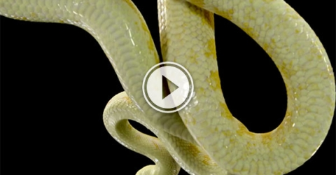 Animals seen through glass panel (Video)