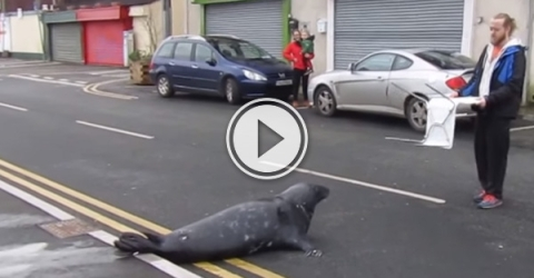 Sammy the seal is one greedy seal, we wouldn't leave till he's fed.