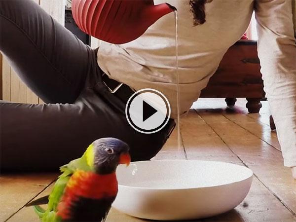 Parrot doing a 'Rain Dance' (Video)