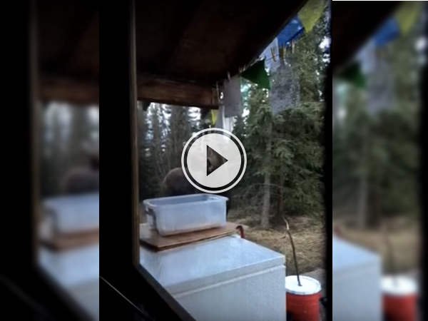 A Moose and some chimes make some magical 'moose-ic!' (Video)