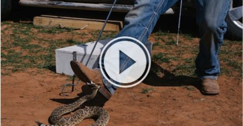 Dangerous video of man escaping the venom of a poisonous rattle snake.