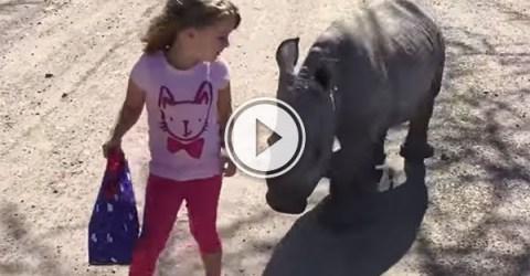 Cute little girl takes cute little rhino for a walk (Video)