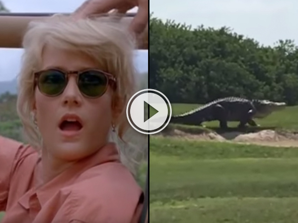 Alligator on golf course gets the Jurassic Park treatment (Video)