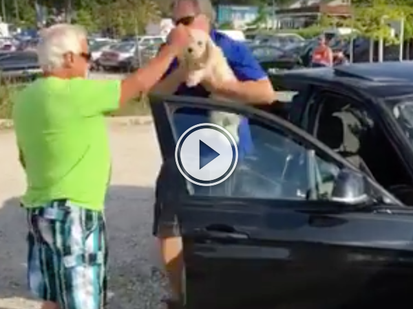 I would have broken more than just a window to save this dog! (Video)