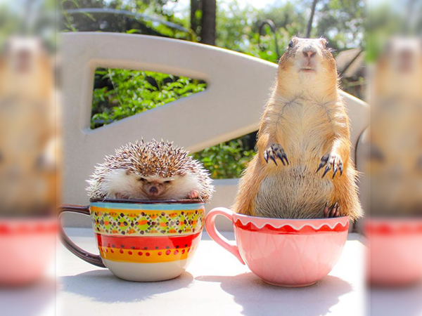 A charismatic duo of prairie dogs by the name of Bing and Swarley whose photos are now all over social media.