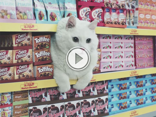German commercial for a supermarket with every Internet cat (Video)