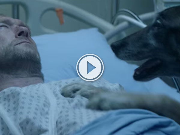 French animal abandonment advert will make you cry (Video)