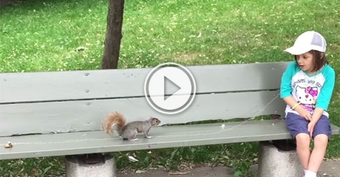 Squirrel pulls tooth in world first (Video)