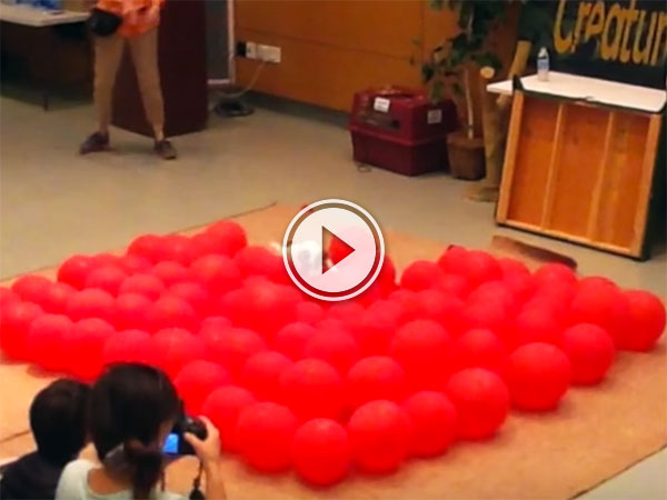 Jack Russell sets world record for balloon popping (Video)