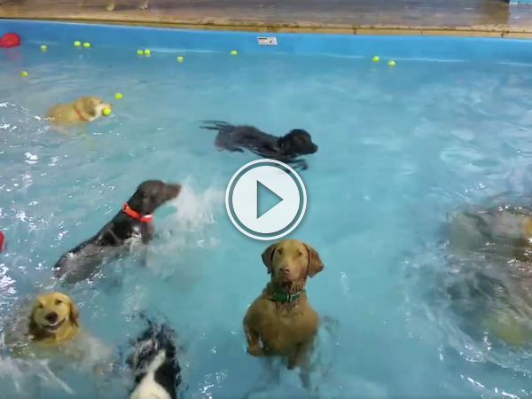 Deadpan dog just awkwardly stares at you during swim time (Video)