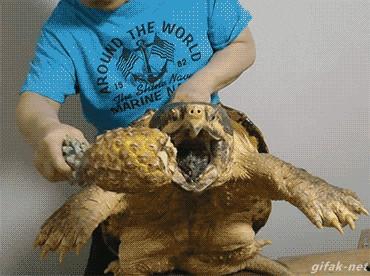 strongest animal bite in the ocean
