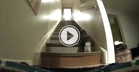 Did anyone ask the cat why the clothes were missing? (Video)