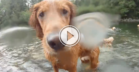 This must be what heaven looks like; dogs swimming (Video)