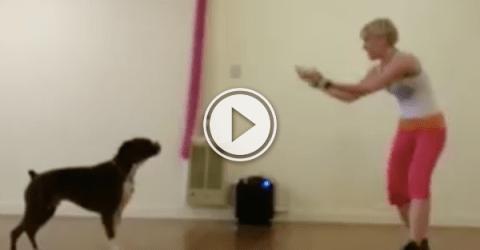 People can Zumba, dogs can Zumba, everyone can Zumba! (Video)