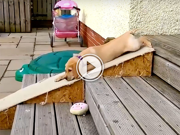 A Dogs on Slides compilation (Video)