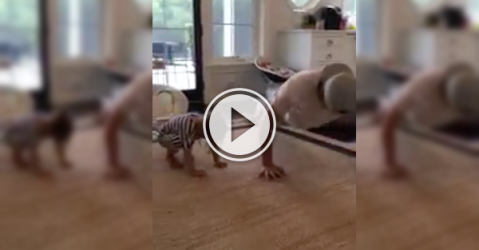 Cute kid tries to outdo her dad in the pushup challenge (Video)