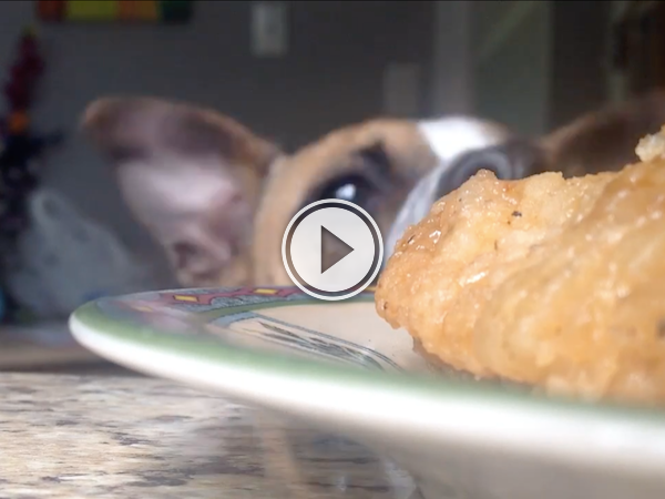 Can someone please give the dog some food? He's earned it! (Video)