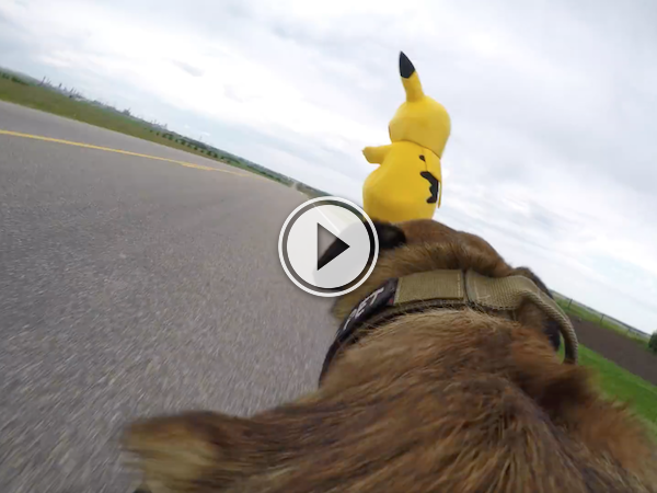 Sometimes a Poke Ball won't be enough; use a dog instead! (Video)