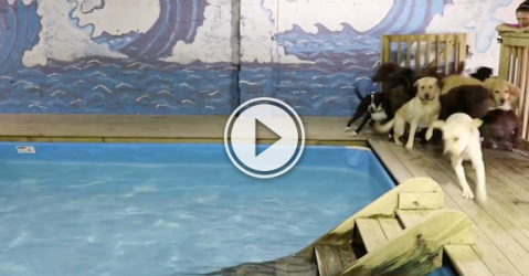 Dogs get pool time, and I get the smiles all over (Video)