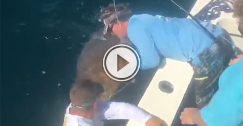 Fisherman gets slapped by Goliath Grouper (Video)