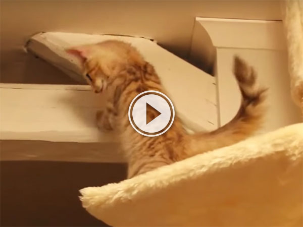 Clumsy kittens are adorable (Video)