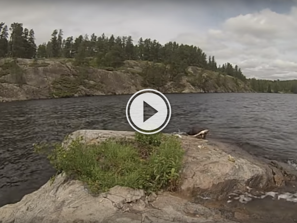 Otters are like the squirrels of the lake (Video)