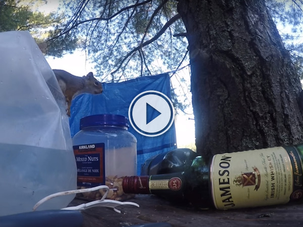 So squirrels can open containers now... I'm starting to get concerned (Video)