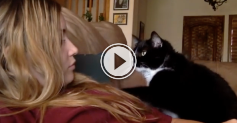 Soft kitty, polite kitty, little ball of politeness. (Video)