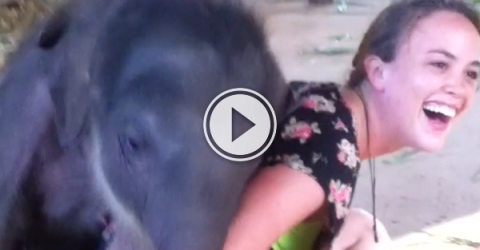 Adorable girl and cute elephant become best friends (Video)