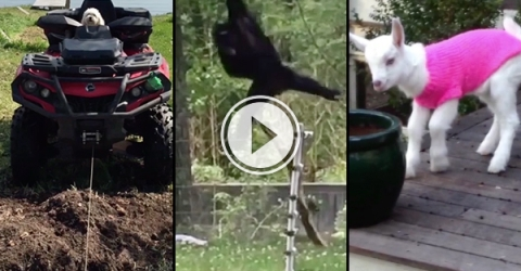 Animals that don't suck compilation (Video)