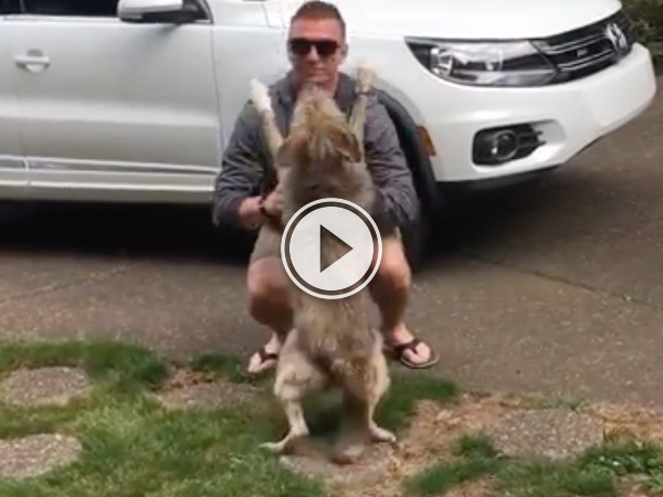 Dog can't contain excitement after seeing again after 8 months (Videos)