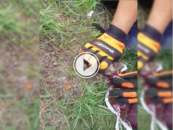 Dramatic rescue of a trapped chipmunk caught on tape; we have feels! (Video)